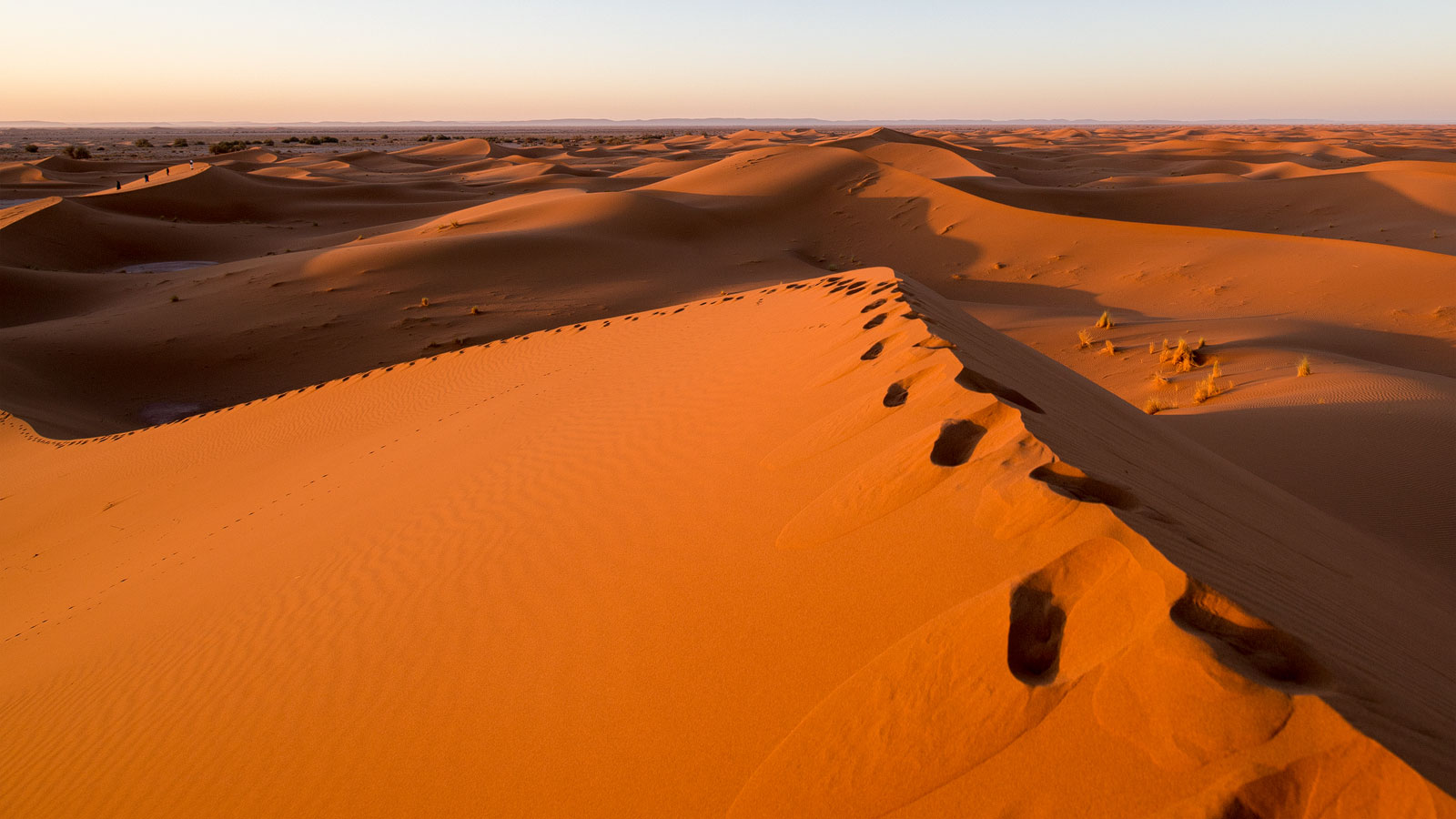 Morgenspaziergang in der Sahara